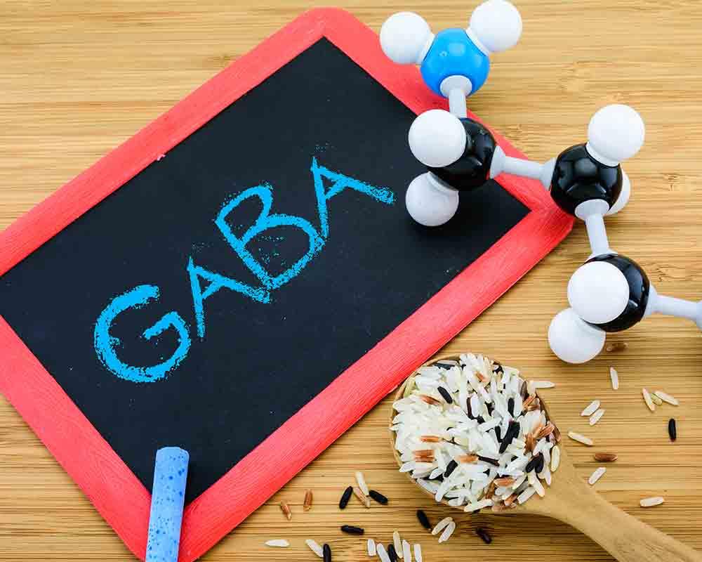 GABA Amino Acids