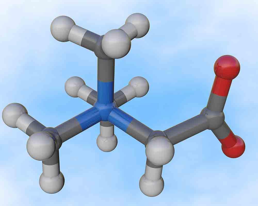 Betaine Amino Acid