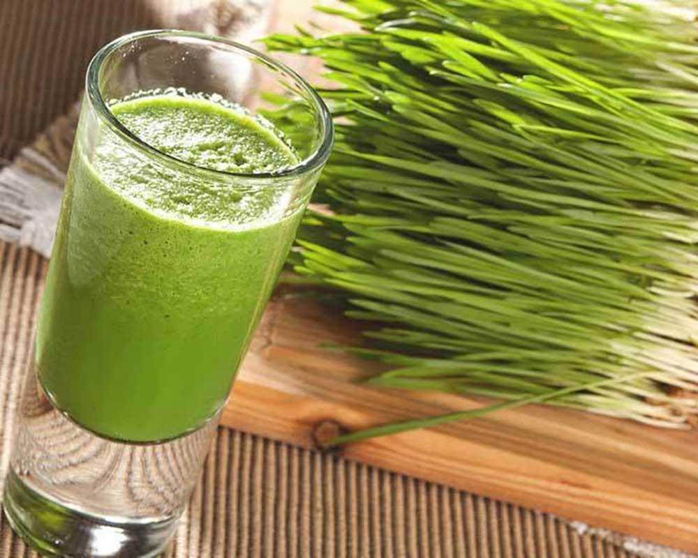 Amino Acids In Wheatgrass