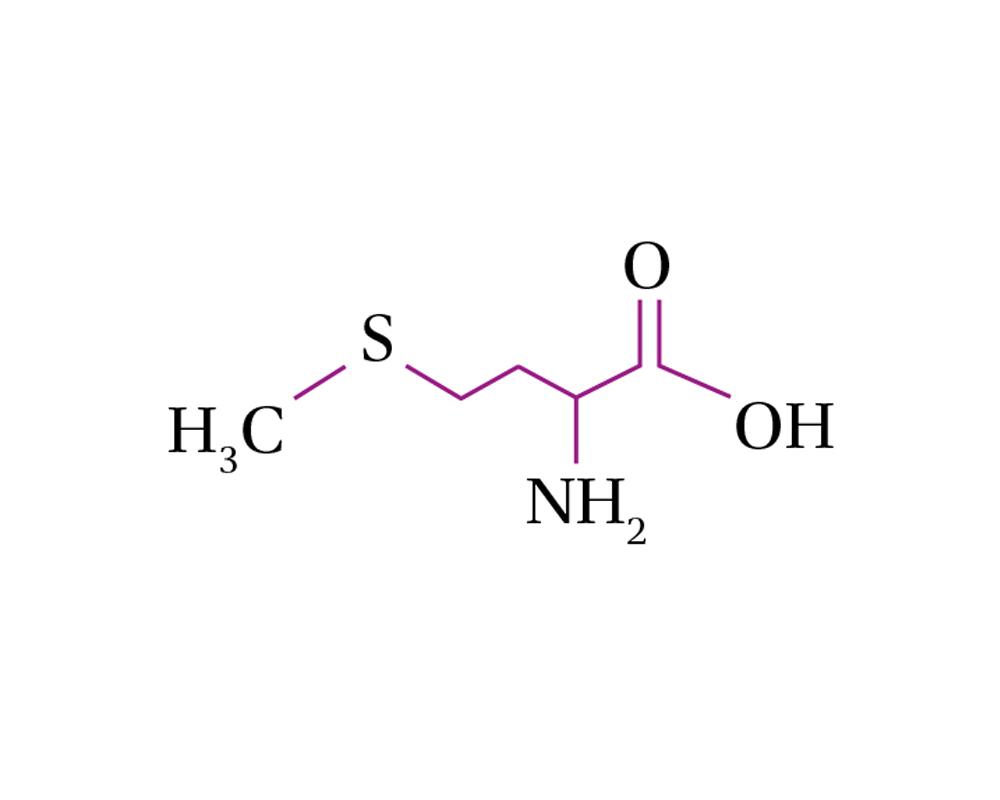 Amino Acids Methionine